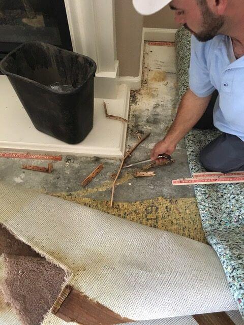 repairing pet urine carpet damage